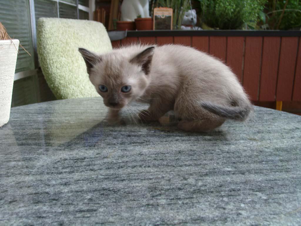 Katzen Bild-03