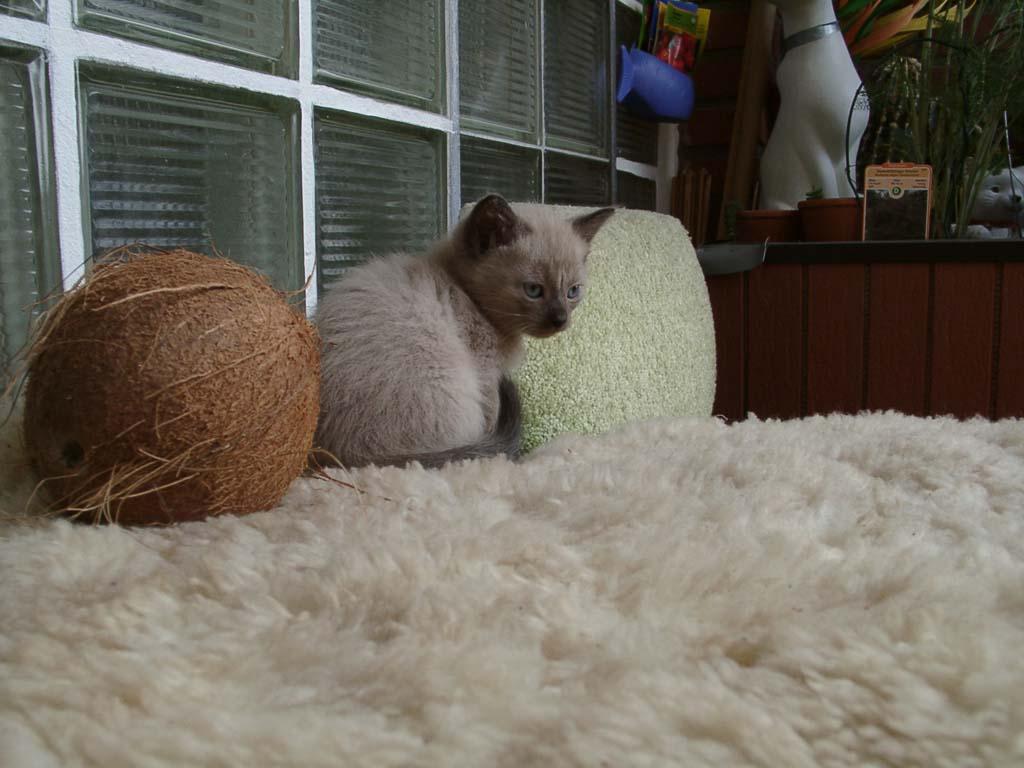 Katzen Bild-04