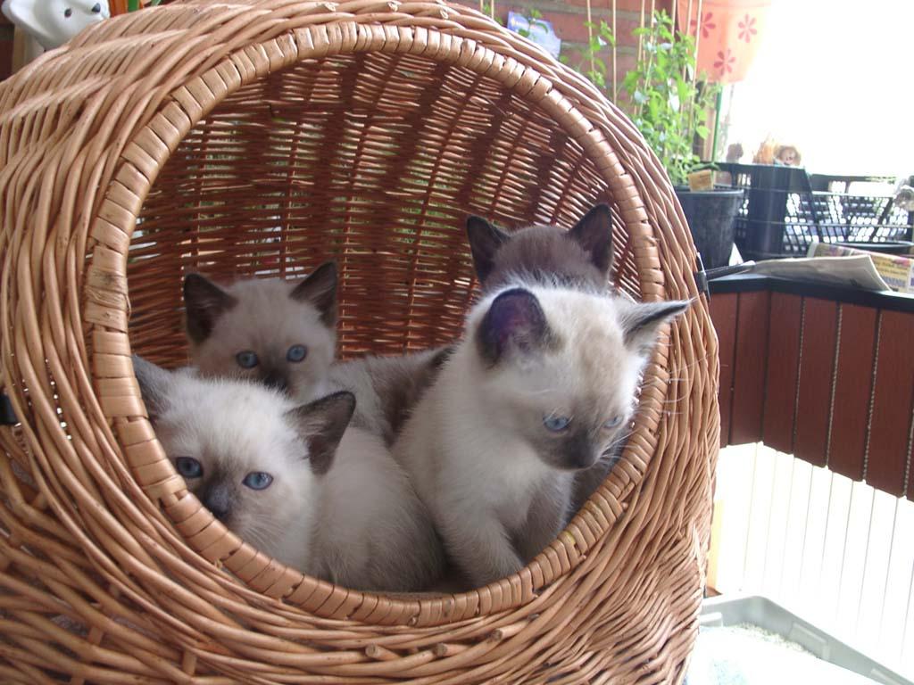 Katzen Bild-08