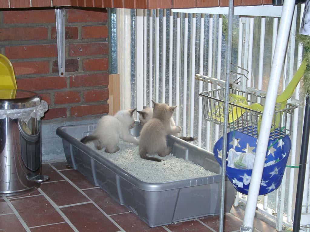 Katzen Bild-09